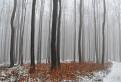 Karpatské hmly