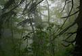 Dažďový prales.