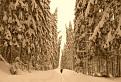 Ťaživá zima v lese