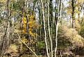 Ponorený les
