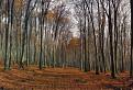 Malokarpatský les