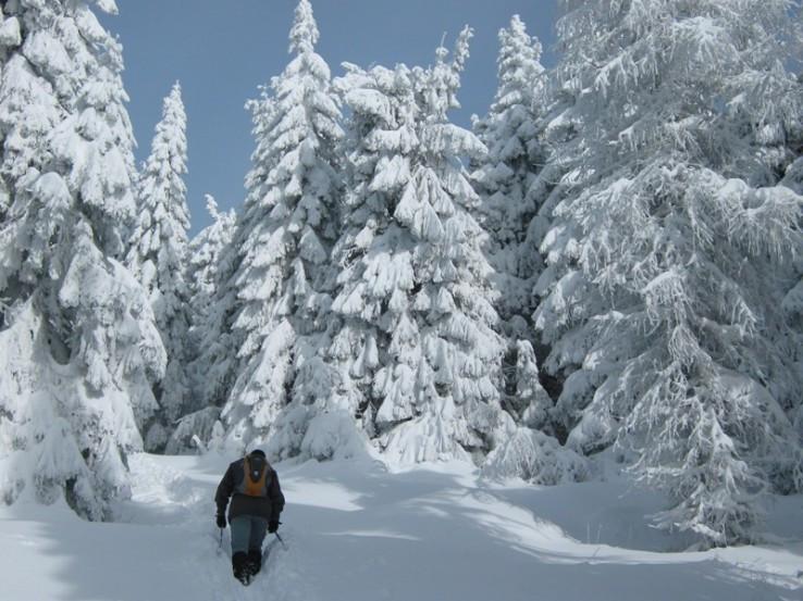 chodníkom na Volovec-Skalisko