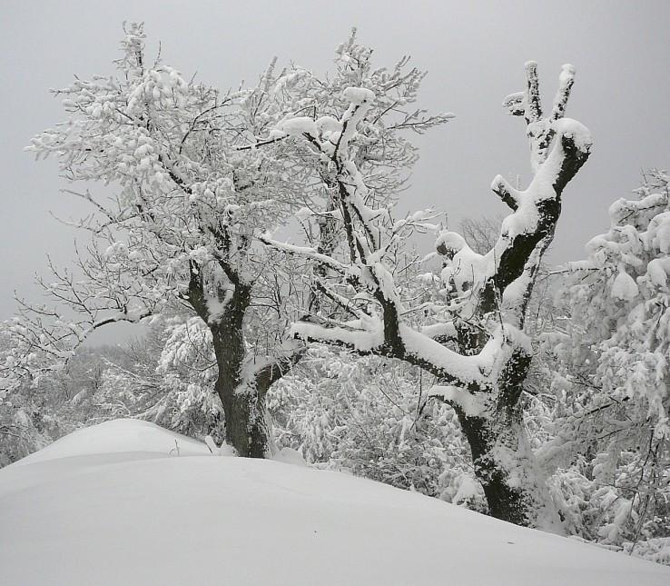 Zima na Klokoči.