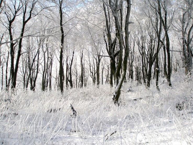 Biela krása na Krivoštianke