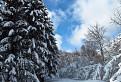 Les pod snehom II.