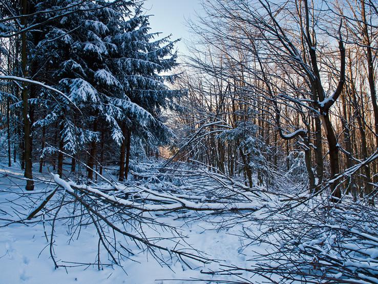 Zničeny les