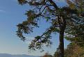 Strom spod Tlstej