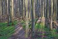 Potulky lesom o dva roky