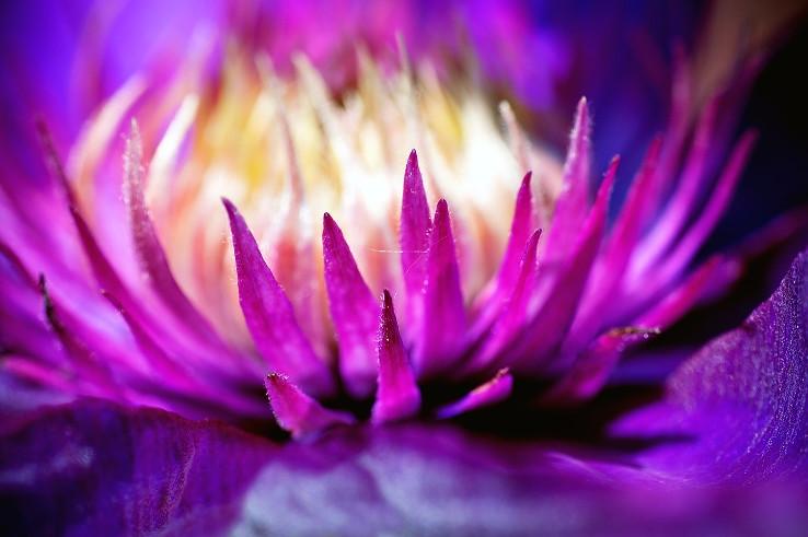 Krása kvetov...