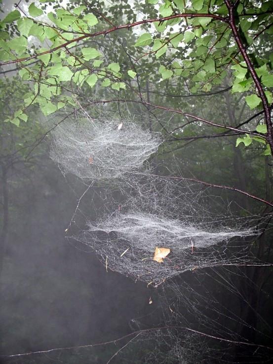 V pavučinách...