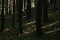 Čaro lesa / 1.1875