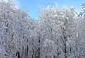 Malokarpatská zima / 1.1379