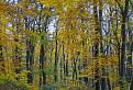 jesen  II