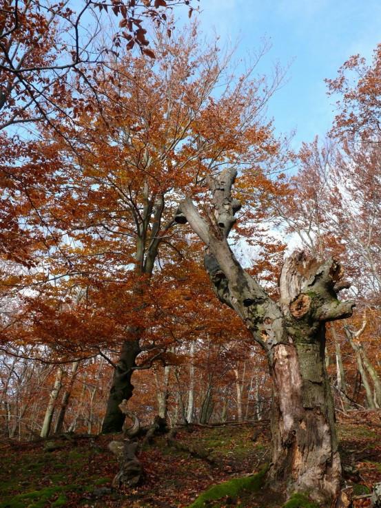 Jeseň pod Inovcom III
