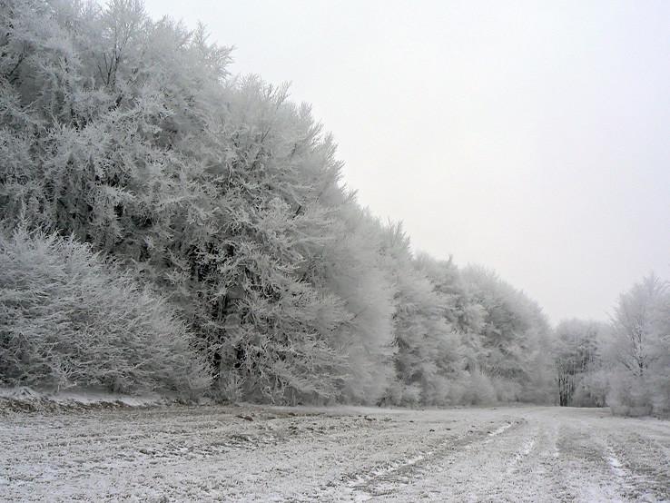 Lesy nad Hačavou