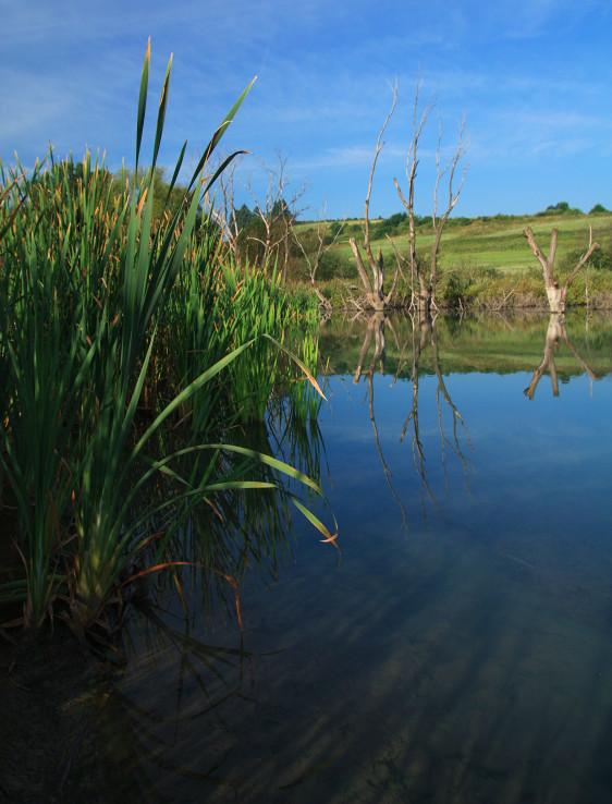 Na popolcekovom jazere