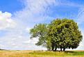 Strom samotár v krásnom prostredí