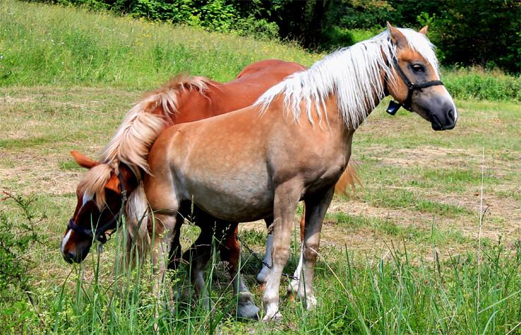 Lúbim ťa jak koňa!, alias blízke stretnutie iného druhu /3/.