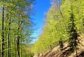 bajkom zeleným rajom