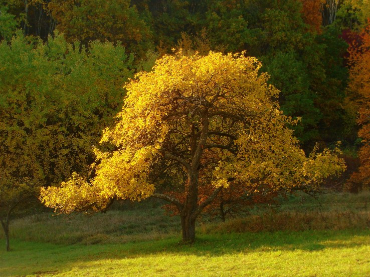 Jedna jesenná