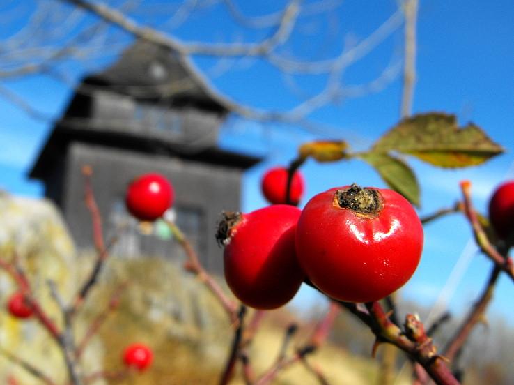 Jesen na Sitne
