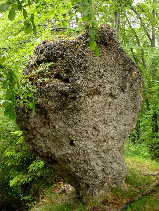 ,,Kamenný hríb