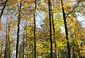 Jeseň v Chvojnici II