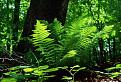 Kyjovský prales