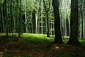 Lesná Čistinka