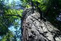 V korunách stromov