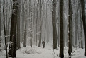 Stratení v pralese