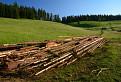 lúky a lesy  Bôrika / 1.0000