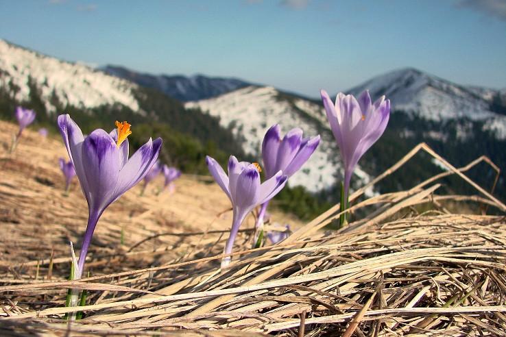 Jar pod Derešmi