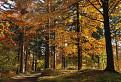 Jesenný les / 0.0000
