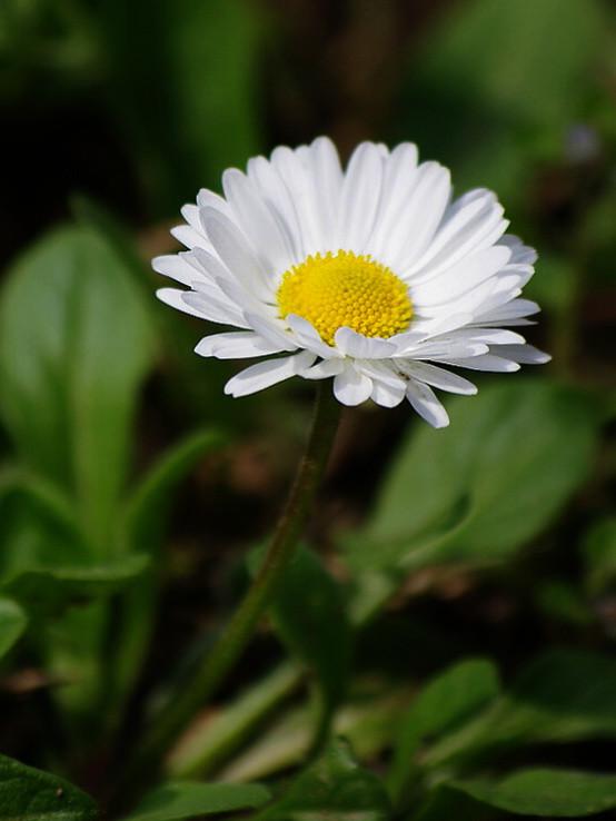 Biéély kvet...