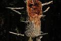 :-) z lesa