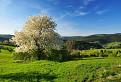Kysucká jar