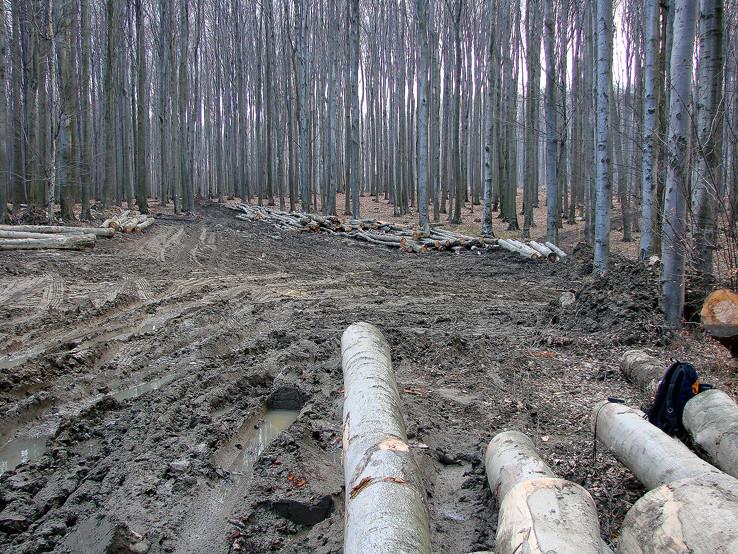 Škodná v lesoch