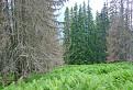 Mŕtvy les?