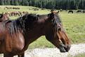 Kôň / 1.5000