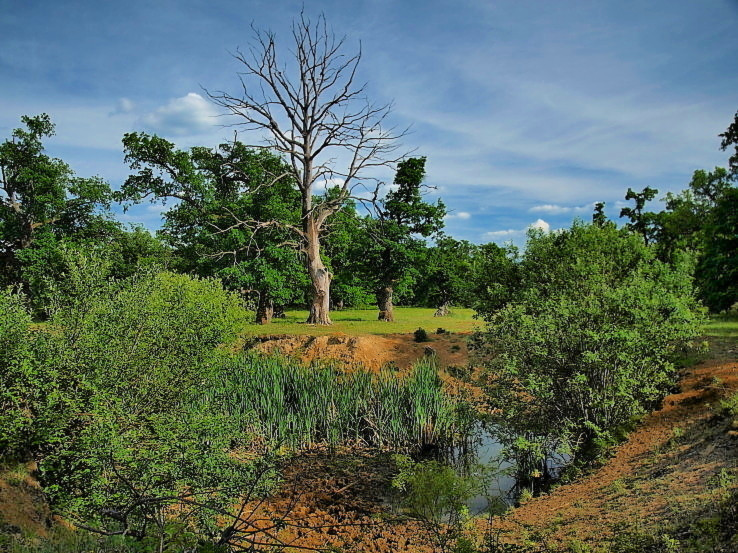 Afrika v Gavurkách