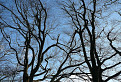 Stromy.