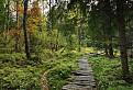 Dreveným chodníčkom na Tŕstie