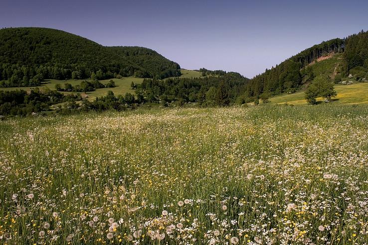 Kudlajov vrch