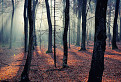 V lese / 1.0333