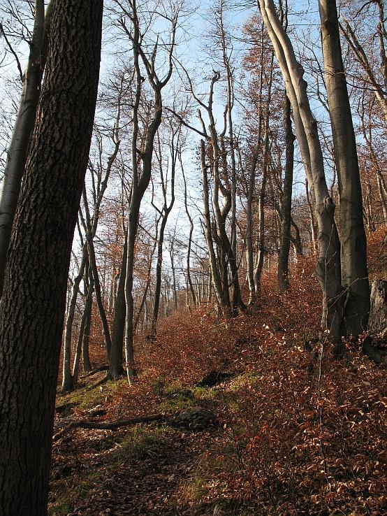 Les pod Zárubami