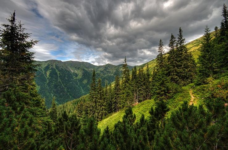 Hranica lesa