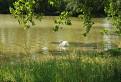 Pohodička pri rybníku