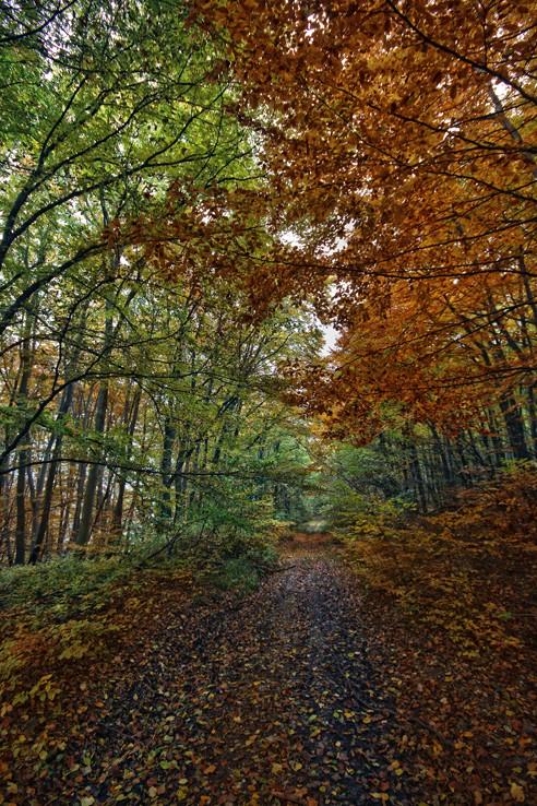 Dušičkový les
