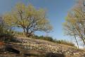 Návšteva Prírodnej rezervácie Solčiansky háj 2
